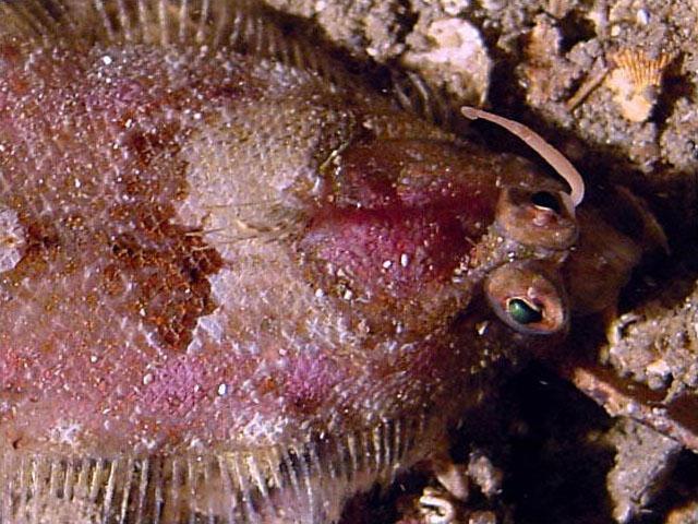 Un lombrico Classificazione scientifica Dominio Eukaryota Regno Animalia Sottoregno Eumetazoa Superphylum Protostomia Lophotrochozoa Phylum Annelida