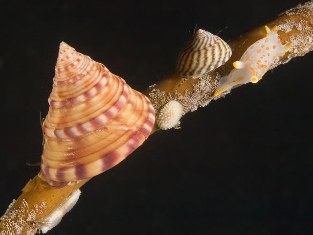 Mollusks - Mollusca
