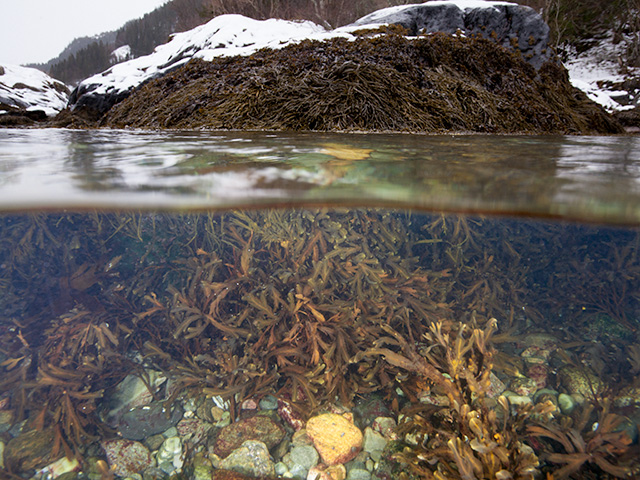 The Marine Flora & Fauna of Norway